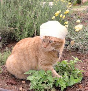 Cat Nip Plant Medicine Hat